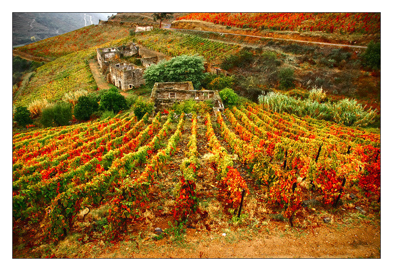 Photograph The vineyards of Portwine by António Marciano on 500px