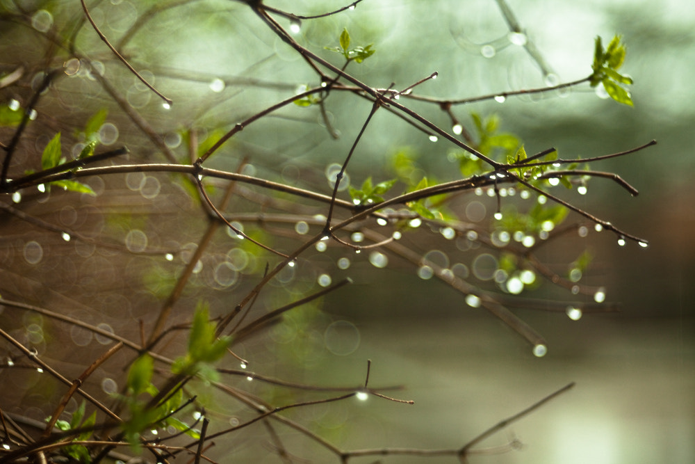 Photograph Raindrops by Michael Lee on 500px