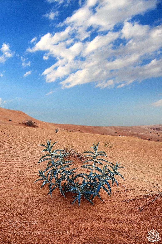 Photograph Untitled by Abduleelah Al-manea on 500px