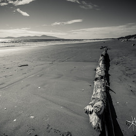 Following Kapiti, 2013