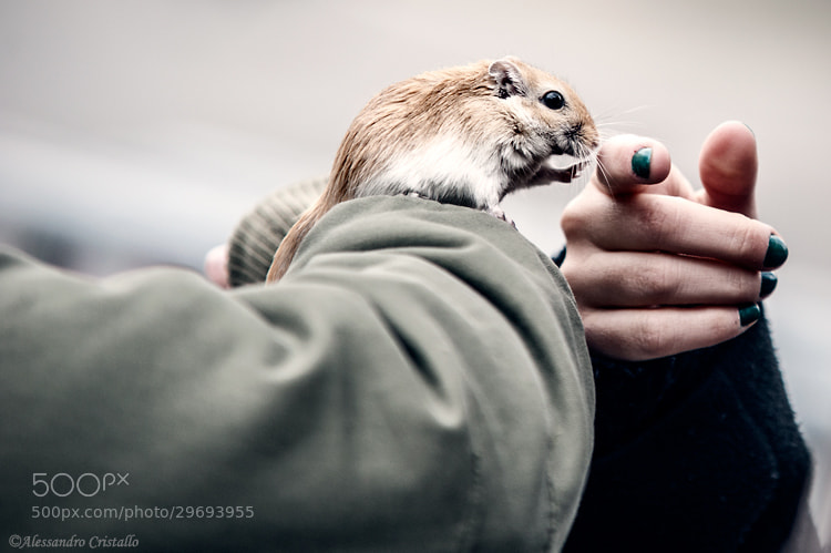 Photograph Contact by Alessandro Cristallo on 500px