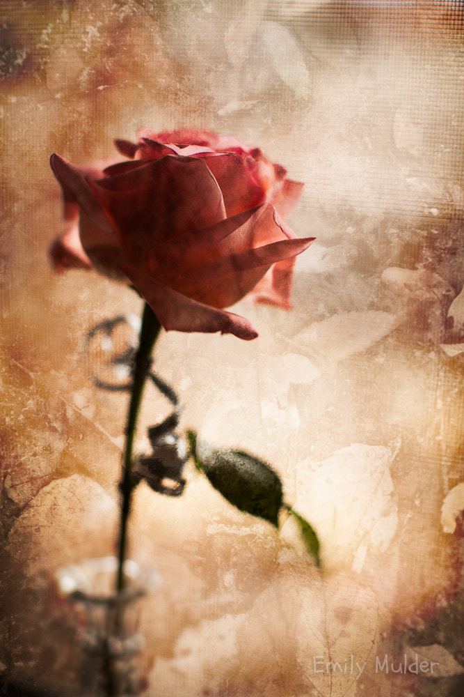 Photograph Rose Art by Emily Mulder on 500px