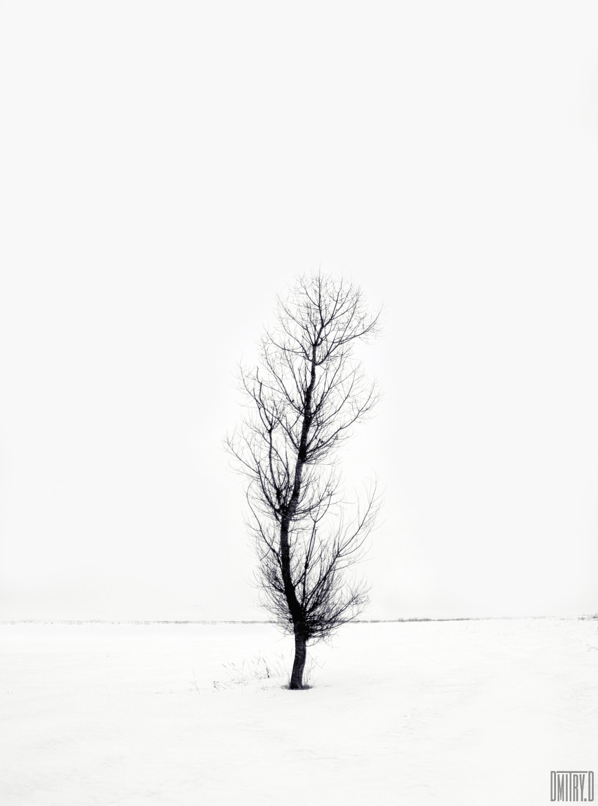 Photograph Lonely tree by Dmitry Doronin on 500px