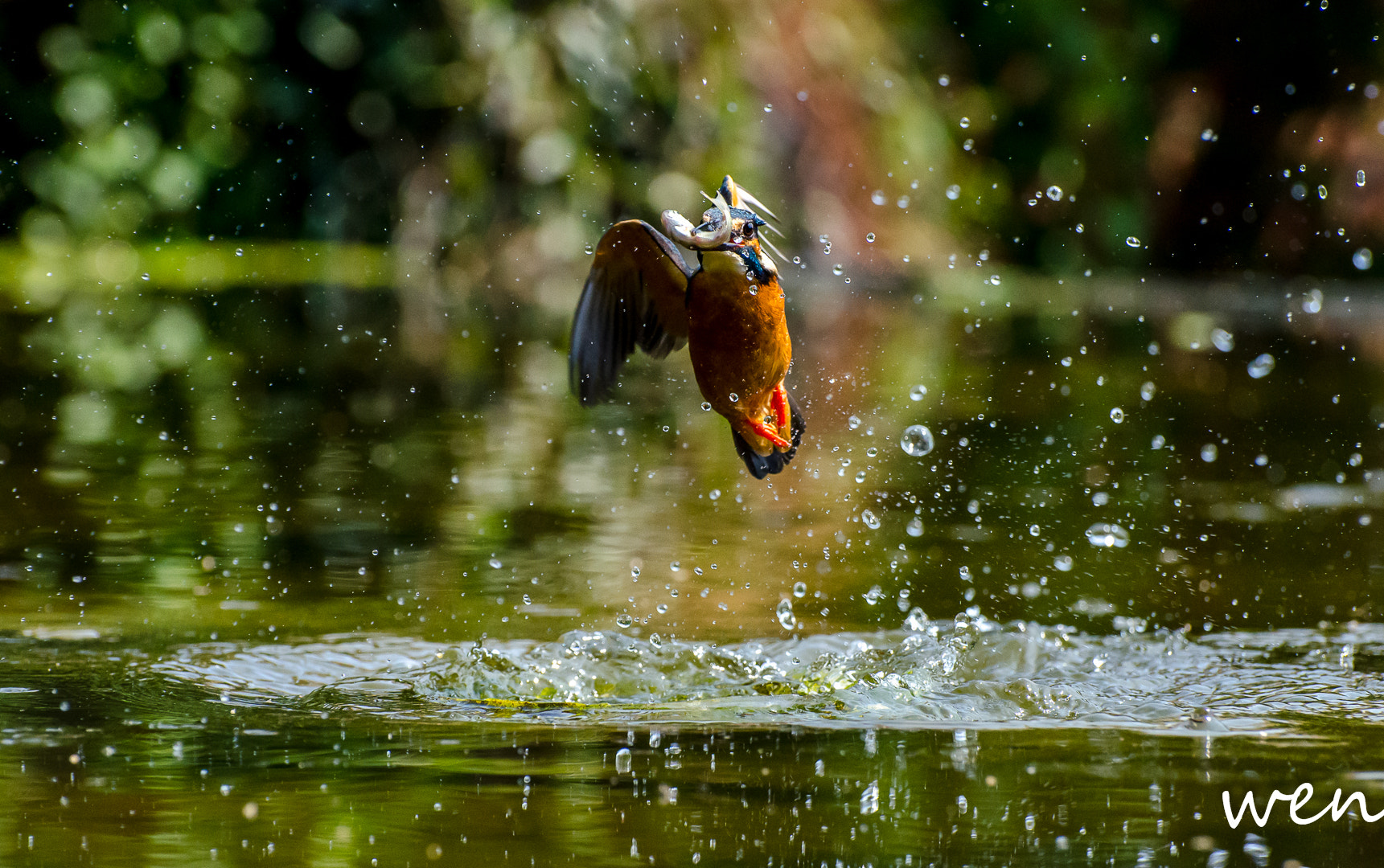 Photograph 翠鳥 Common Kingfisher by 儹紋 林 on 500px