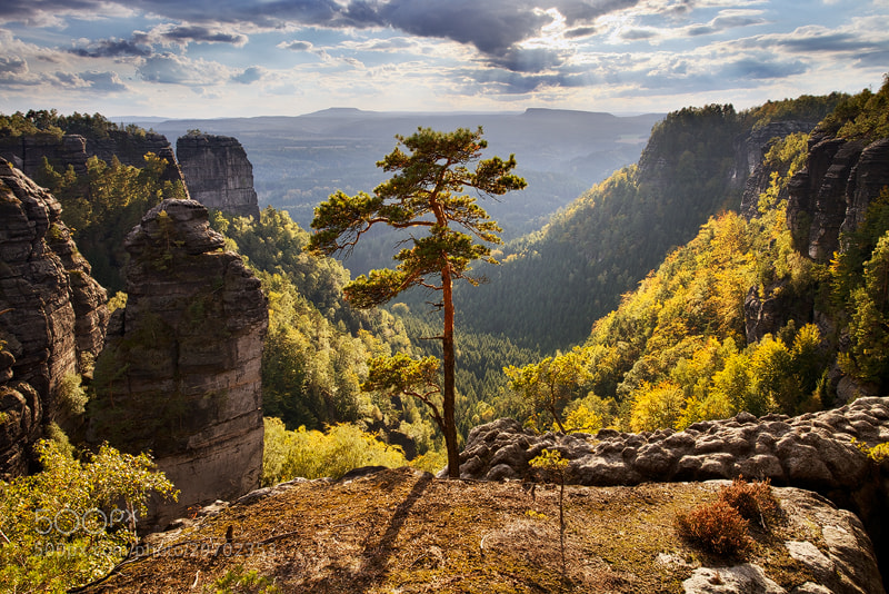 Photograph Against the Light by Martin Rak on 500px