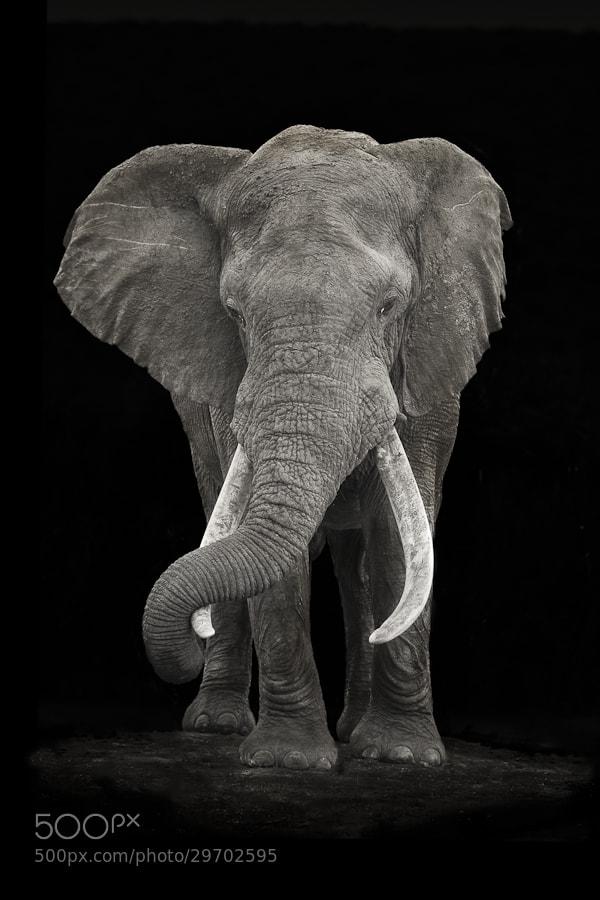 Photograph Addo Giant by Mario Moreno on 500px