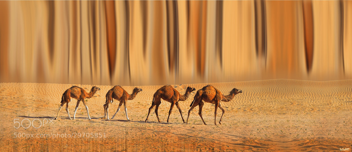 Photograph Desert life by Sandra Sachsenhauser on 500px