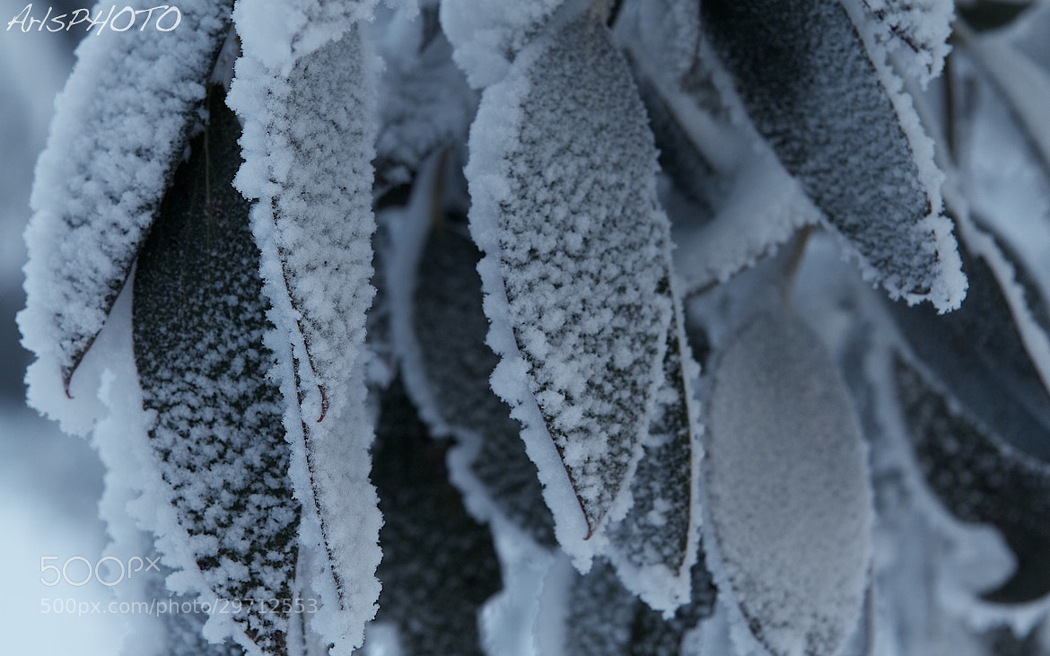 Photograph Frosted by Adam Smith on 500px