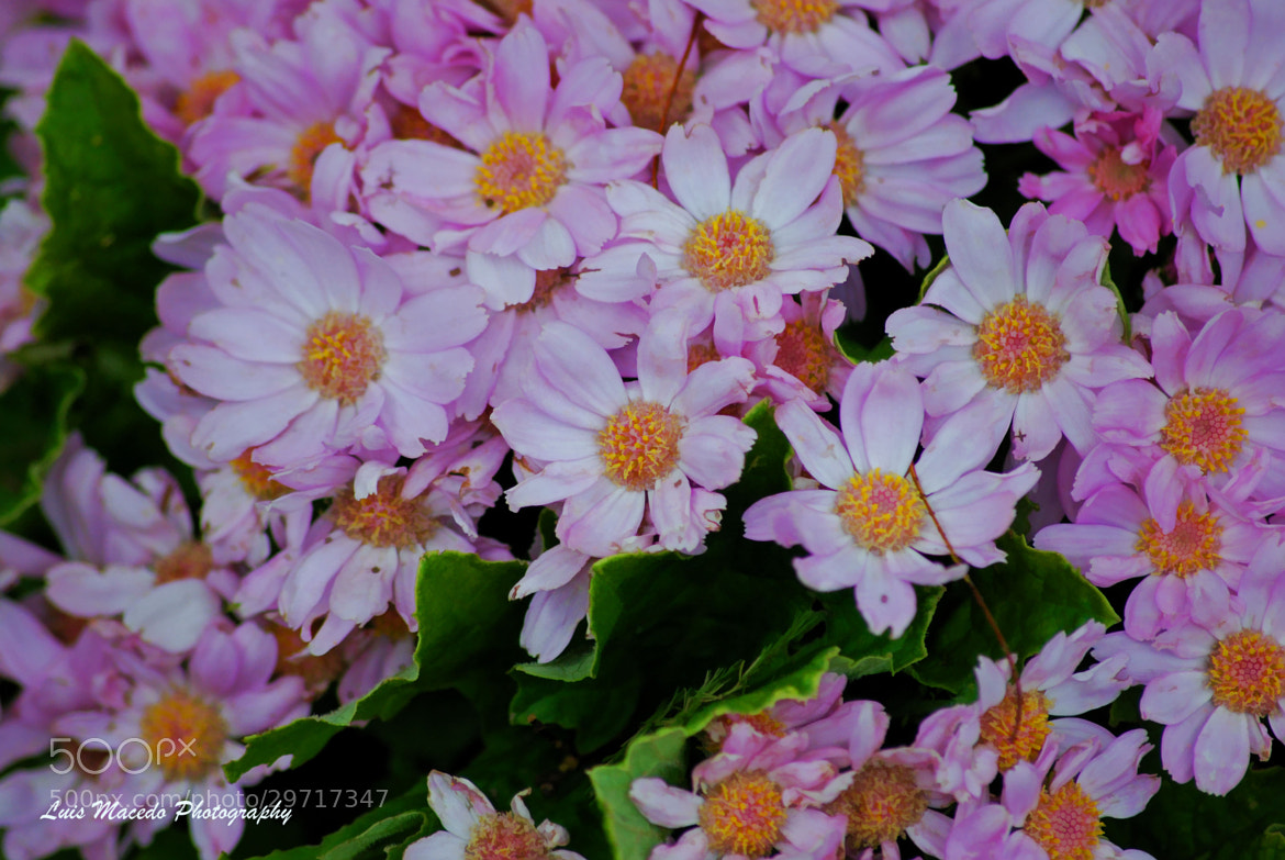 Photograph Happy Easter by Luis Pereira on 500px
