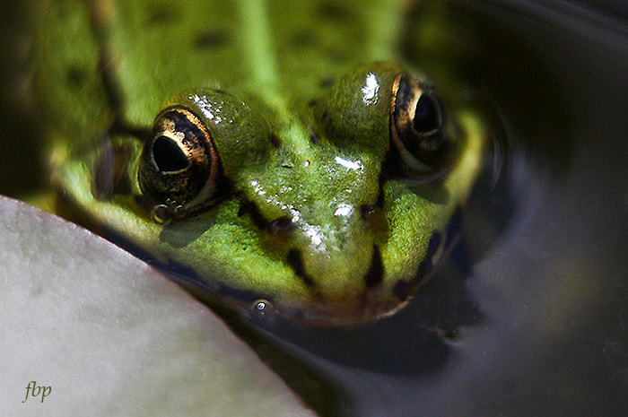 Photograph Frogs eye view by Dave Smith on 500px
