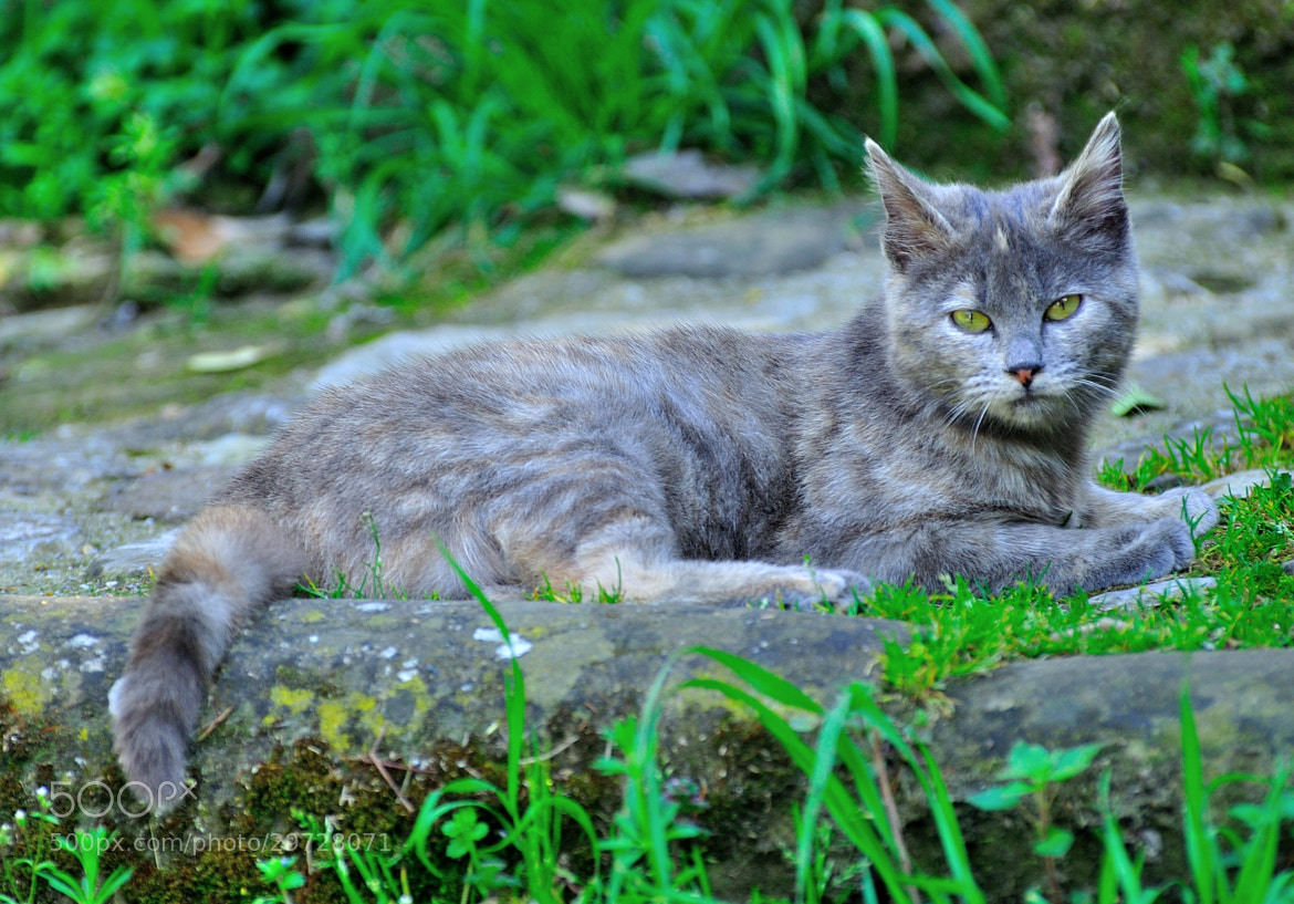 Photograph Beautiful gray kitty! by Renato Pantini on 500px
