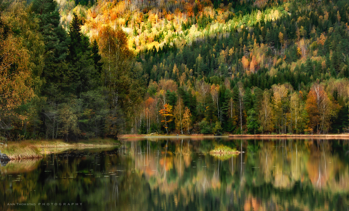 Photograph Autumn Symphony by Ann Thomstad on 500px