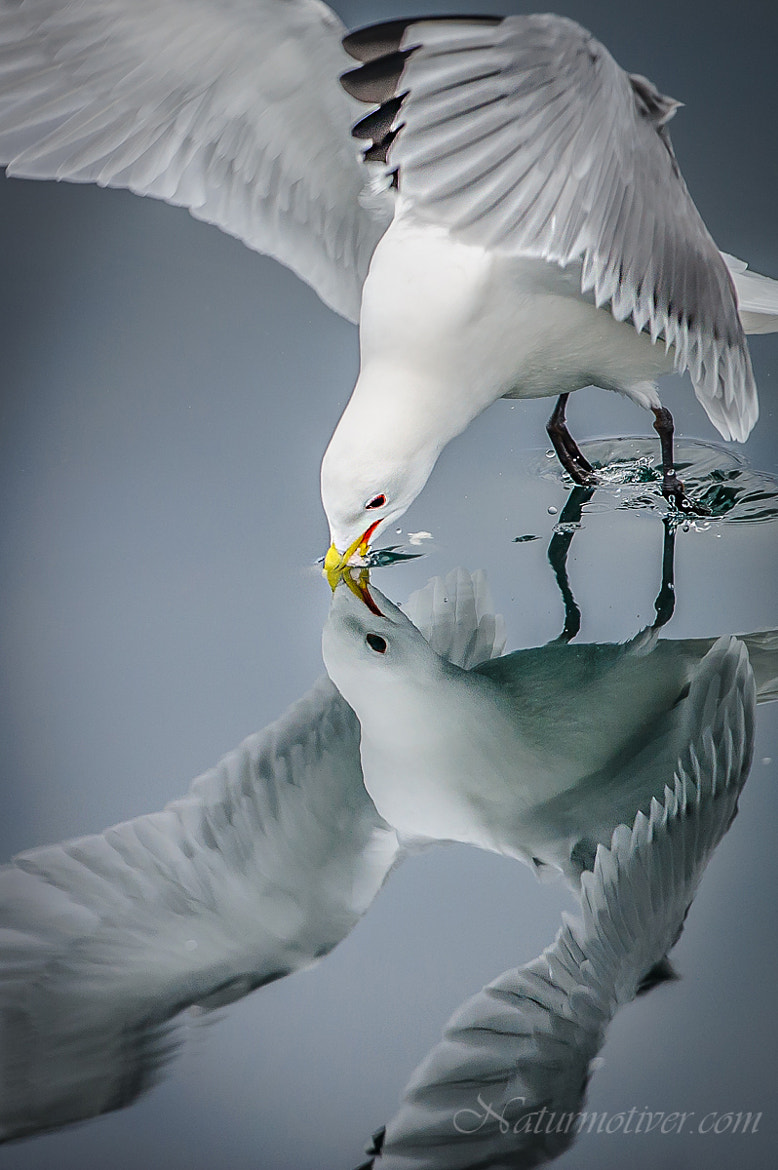 Photograph Mirror bird II by Geir Magne  Sætre on 500px