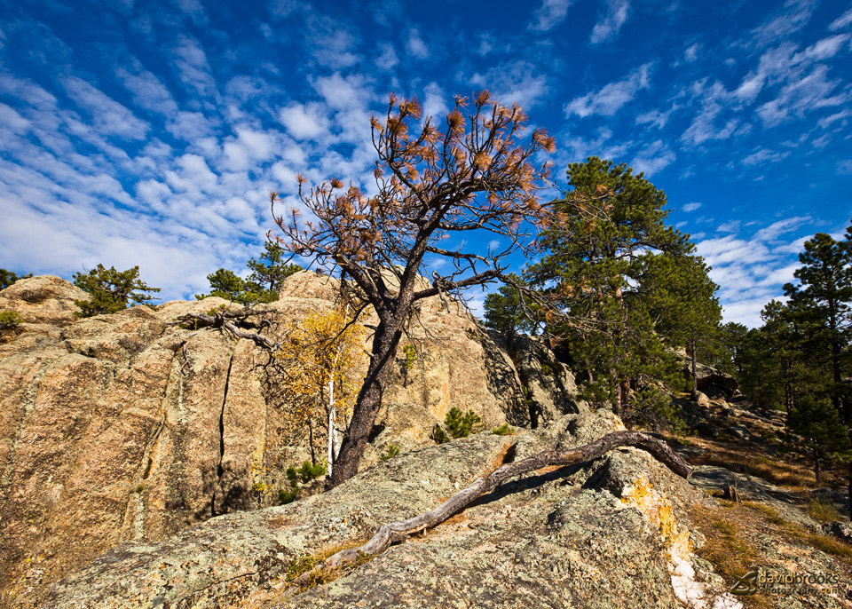 Photograph Custer State Park by Dave  Jr on 500px