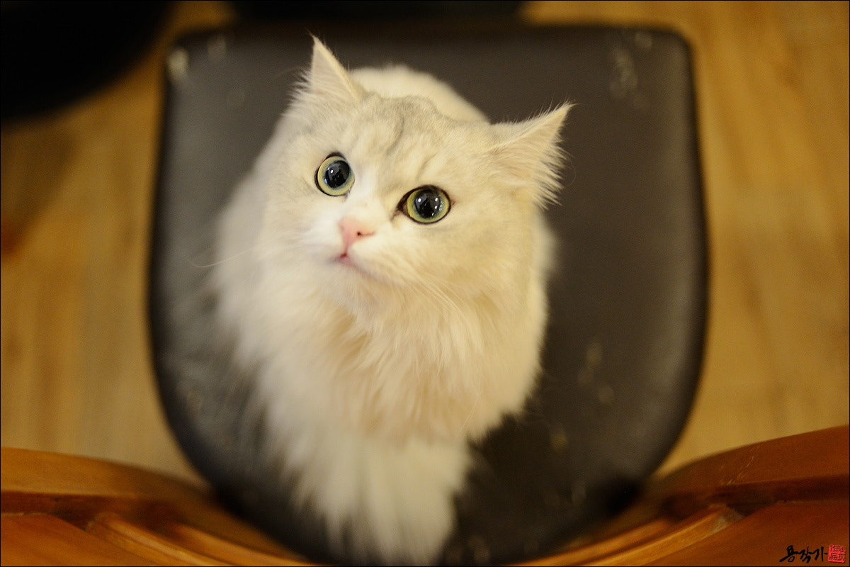 Photograph Cute Cat by Photographer YonG on 500px