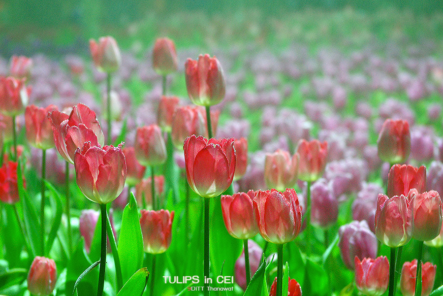 Photograph Color of Blossom by DiTT Thanawat  on 500px