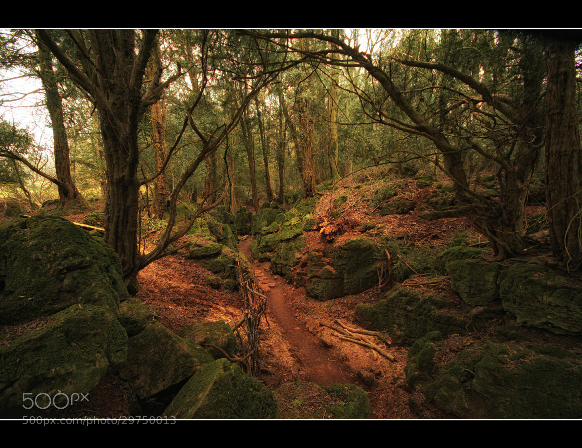 Photograph Puzzlewood by Nick Stewart on 500px