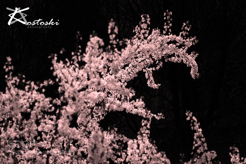 Photograph The Background by Krste Kostoski on 500px