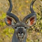 Sabi Sands Private Game Reserve, Kruger National Park, South Africa