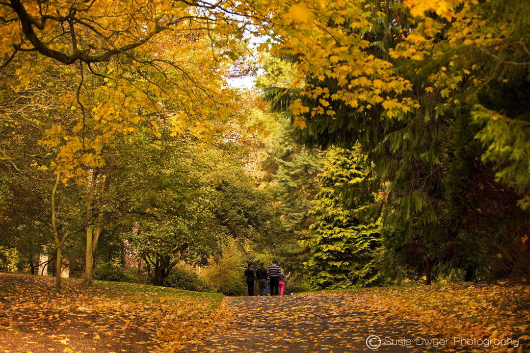 Photograph Autumnal Stroll by Susie Dwyer on 500px