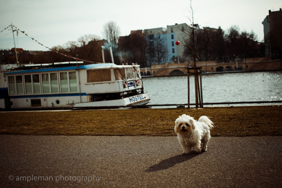 Little doggy by the Spree