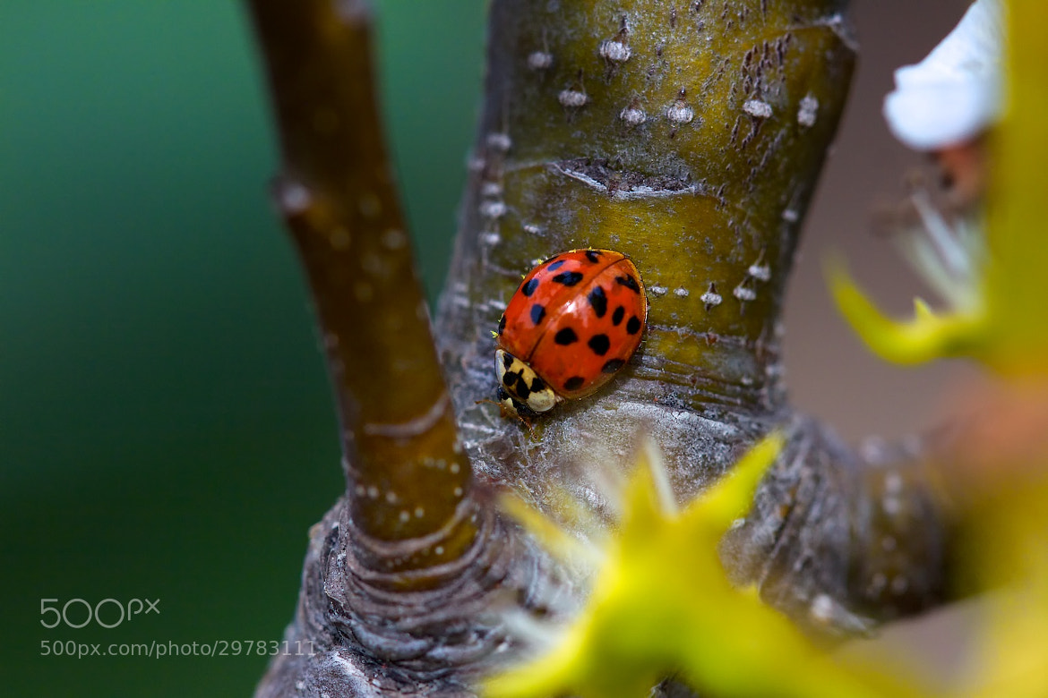 Photograph Some Lady Bug by Earl Bones on 500px