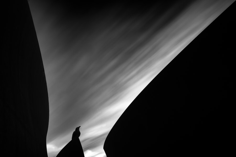 Photograph The Sentinel by Ryan Krause on 500px
