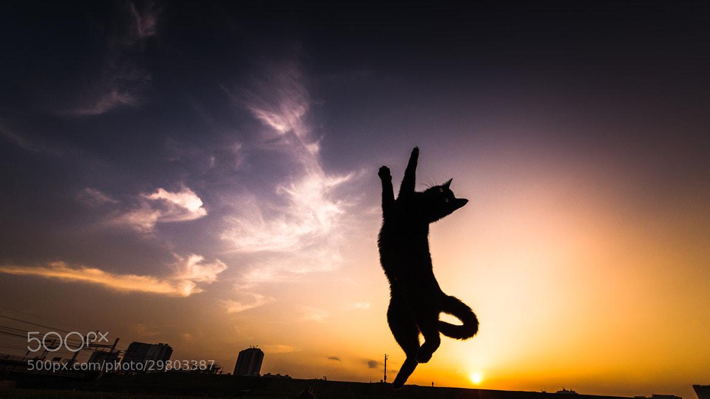 Photograph Black Cat Dancing by Seiji Mamiya on 500px