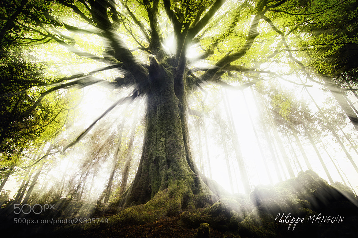 Photograph To the light by Philippe MANGUIN on 500px