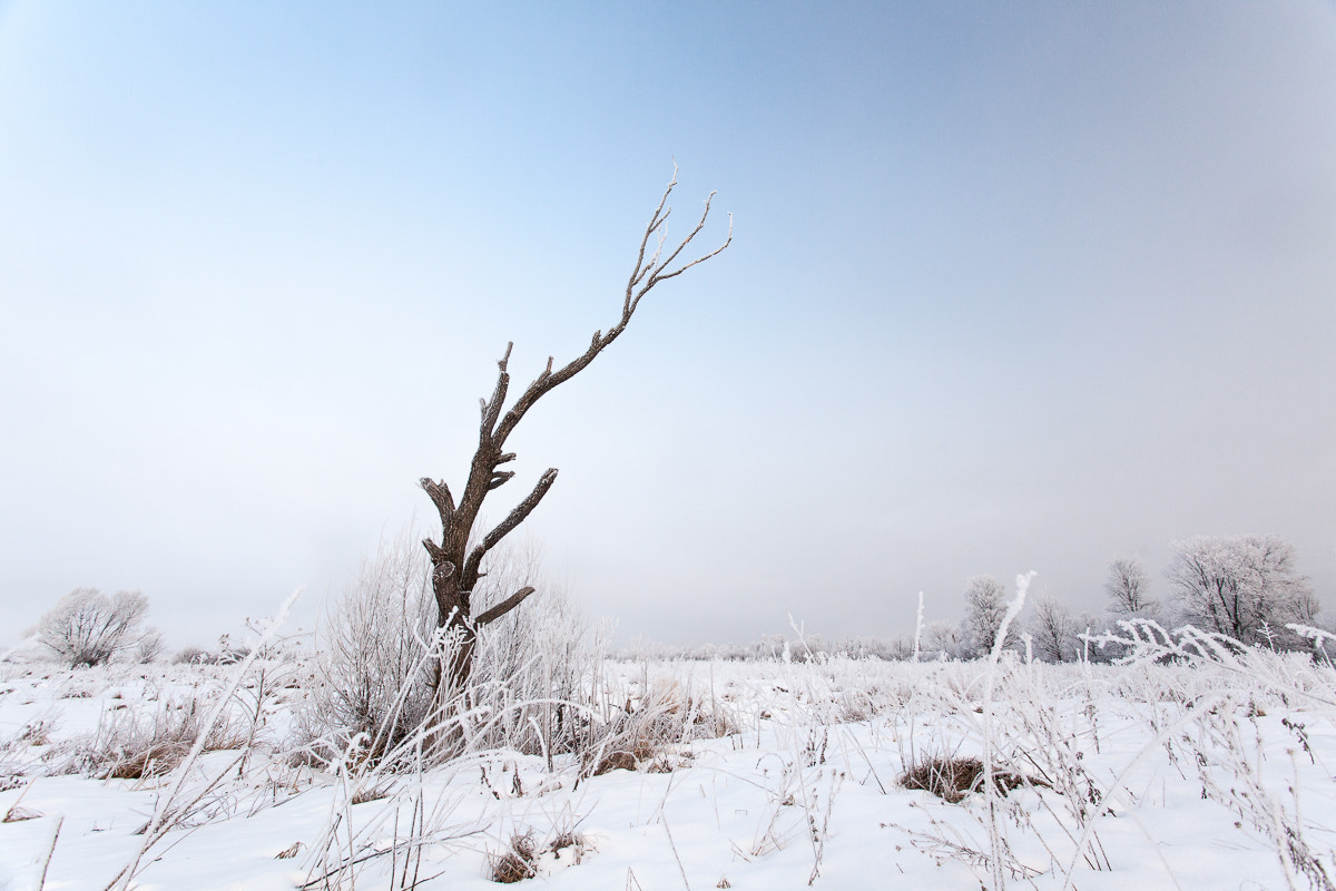 Photograph Lonely (color ver.) by Denis Belyaev on 500px