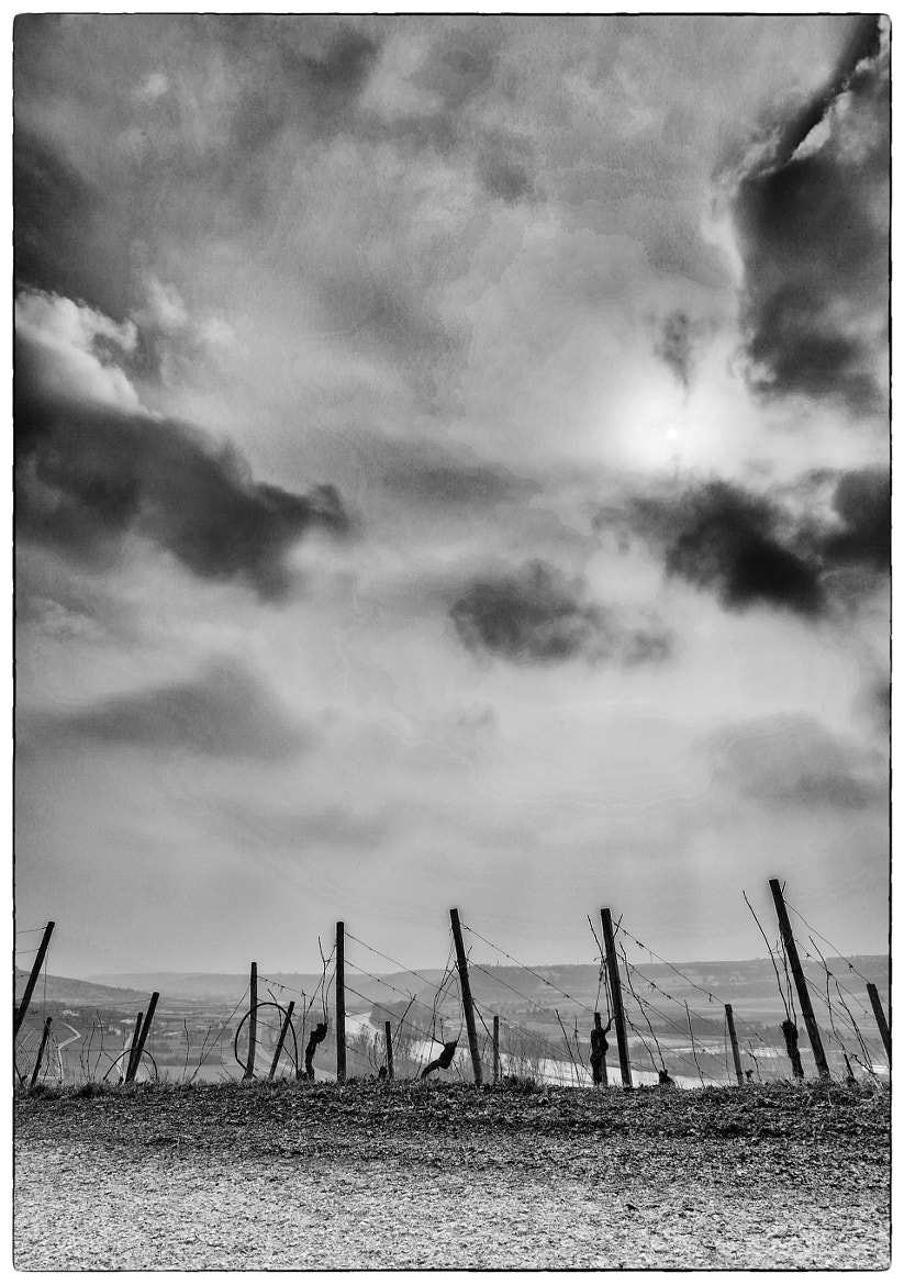 Photograph sun attracts the vine by Ralf Kuhn on 500px