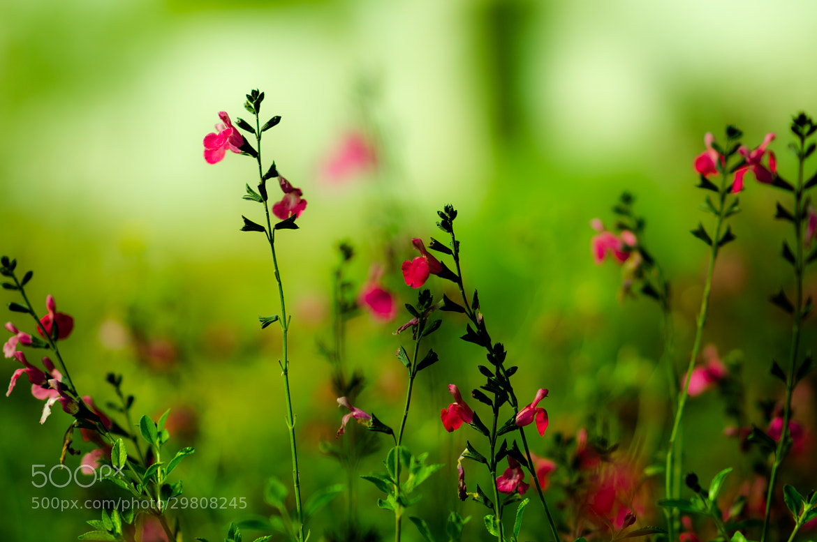 Photograph Rojo y verde / Red and green by Juan José Morales Arrazola on 500px