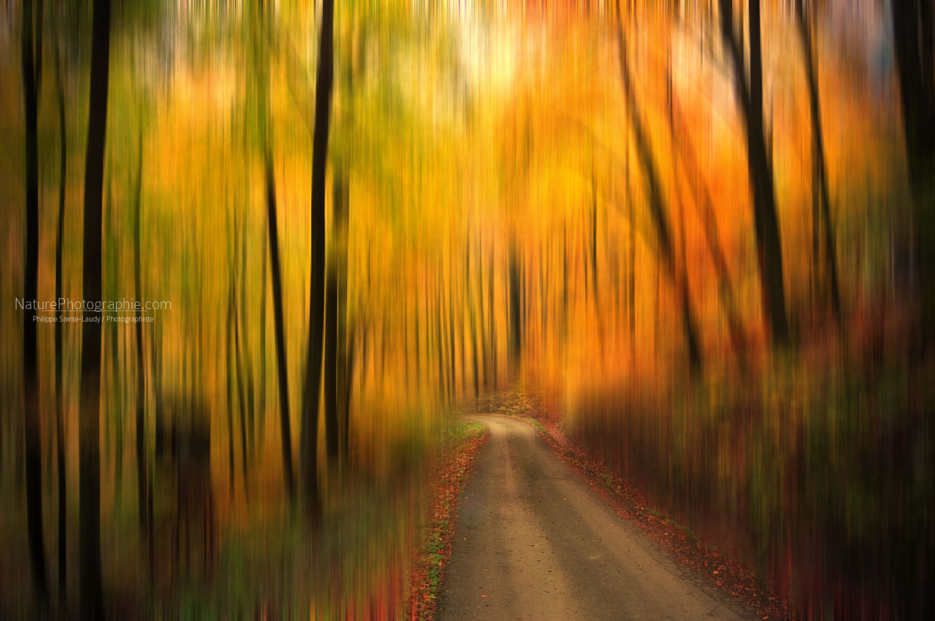 Photograph Welcome To My Fall by Philippe Sainte-Laudy on 500px