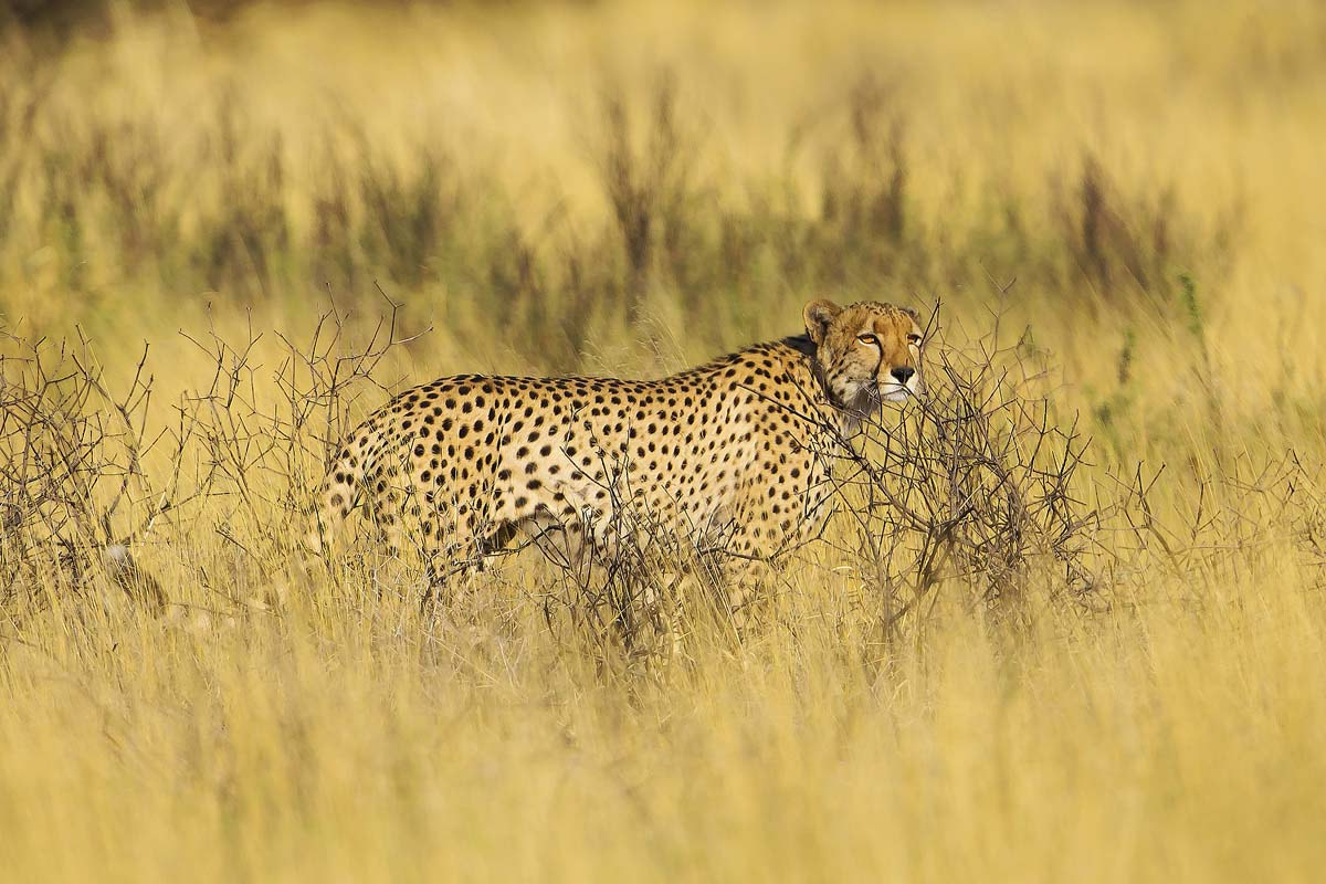 Photograph Speed King by Clive Wright on 500px