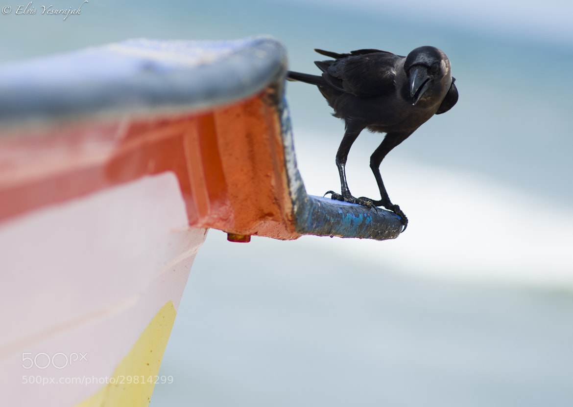 Photograph scare crow! by Elvis Yesurajah on 500px