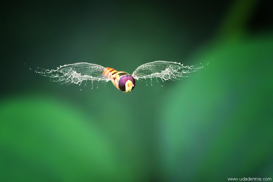 Photograph My Water Wing by Uda Dennie on 500px