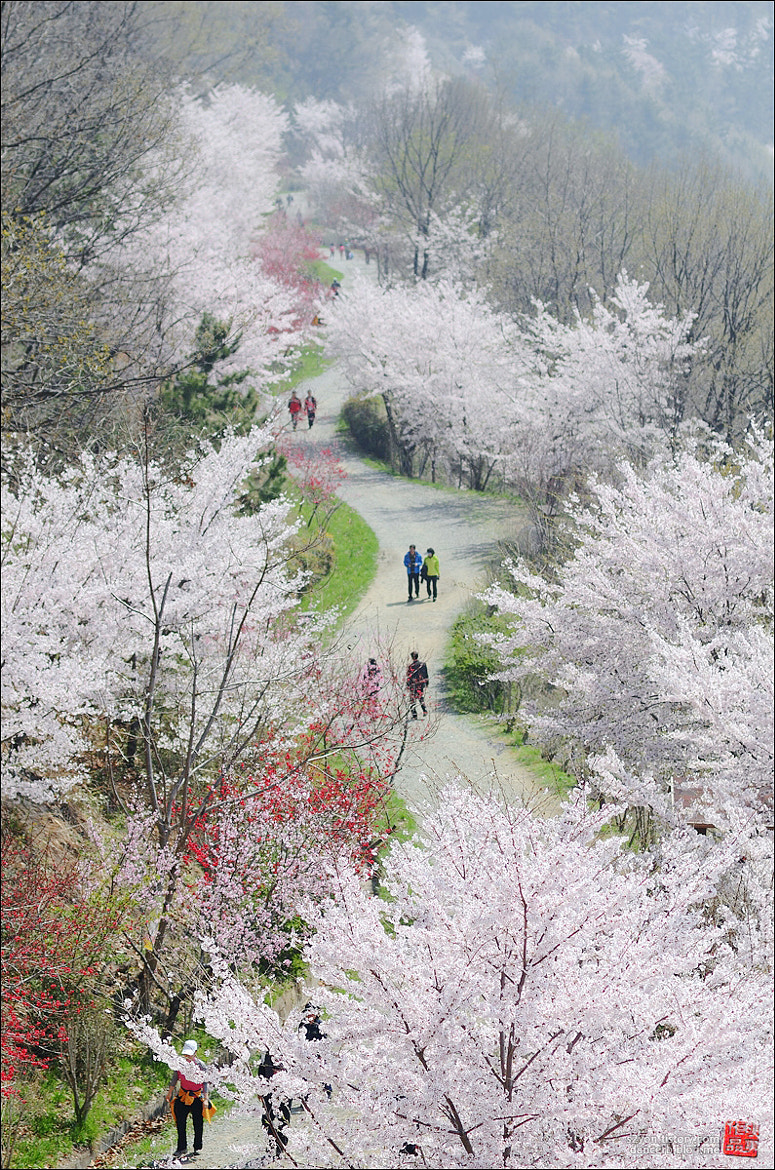Photograph Dream Road by Photographer YonG on 500px