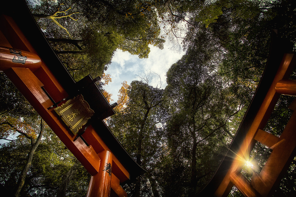 Photograph Fushimi Inari-taisha by Geoffrey Gilson on 500px