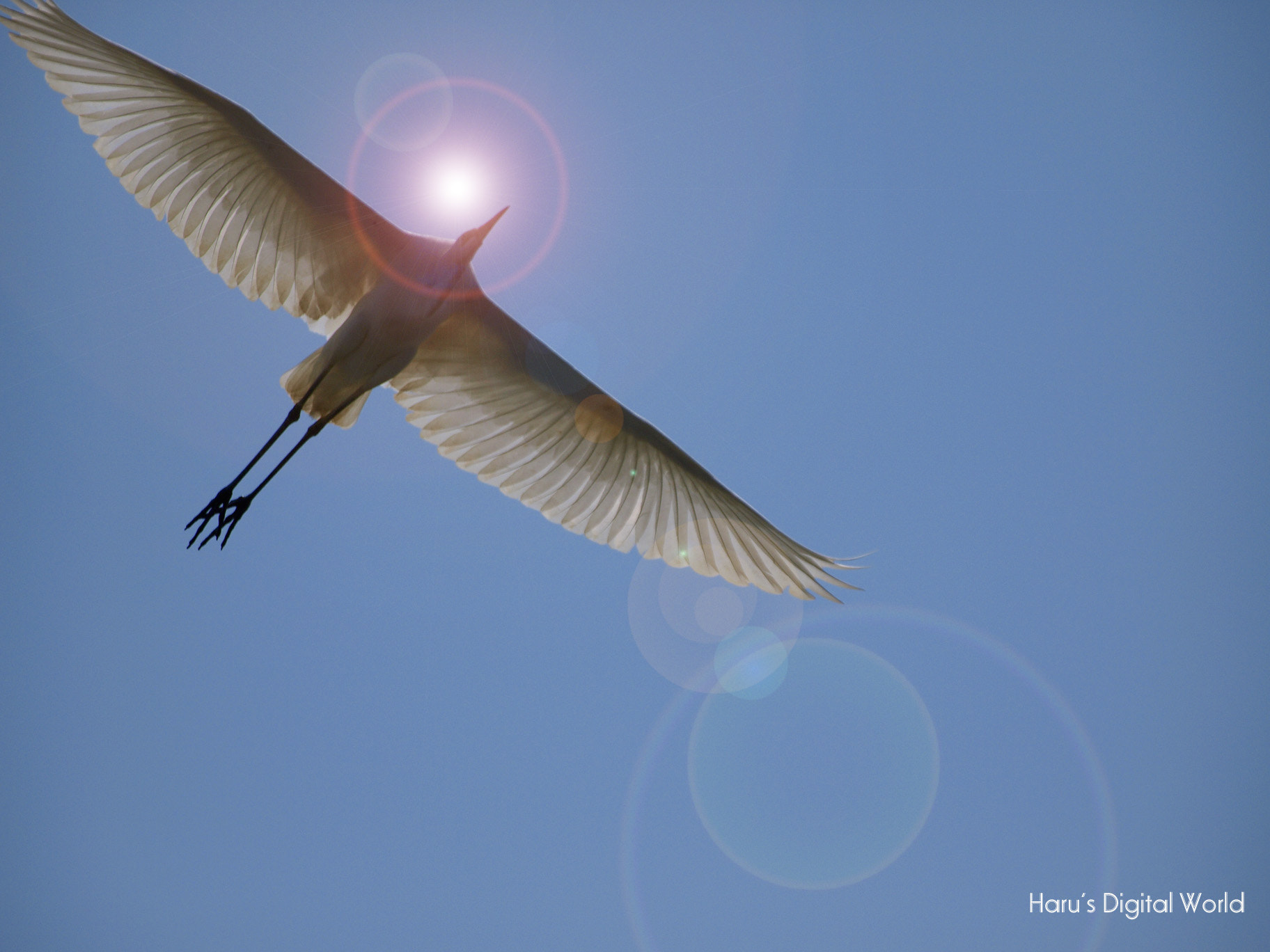 Photograph Flight by Haru Nature photo on 500px