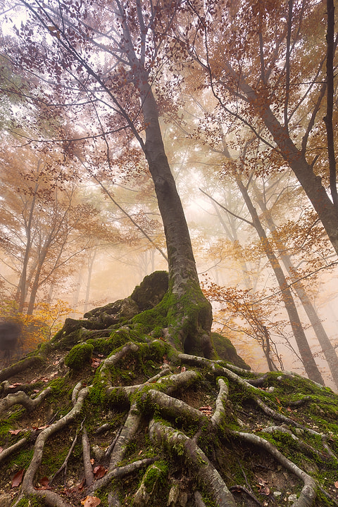 Photograph Roots by Claudio Coppari on 500px