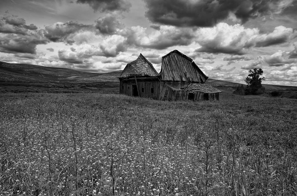 Photograph Still Standing by Javier Acosta on 500px