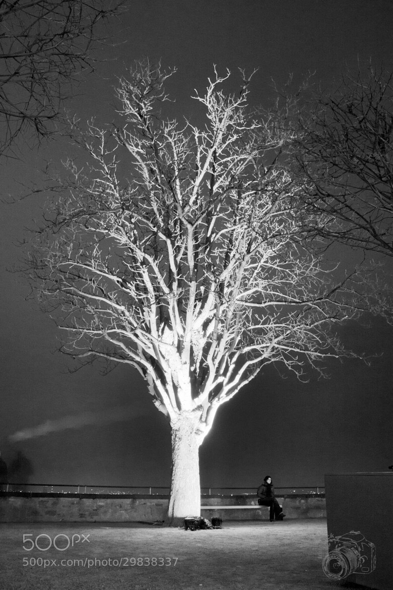 Photograph Same tree, no colour by Ingo F. on 500px