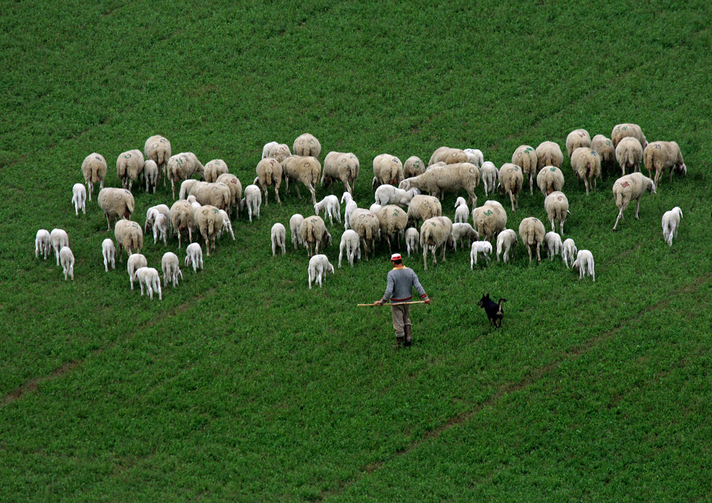 Photograph the flock by ivo pandoli on 500px