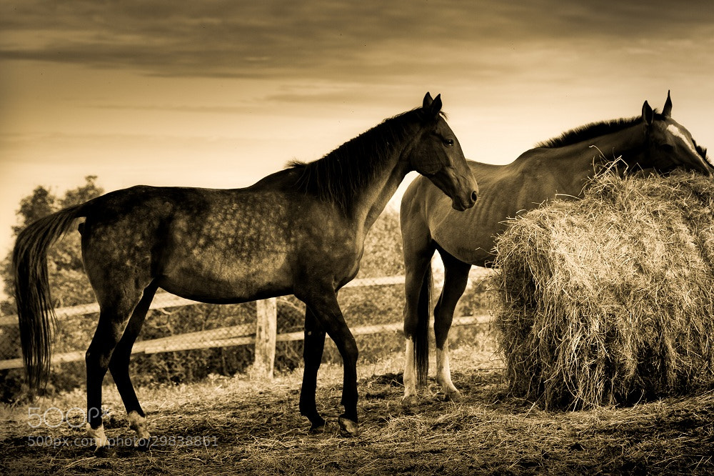 Photograph Of western by Skonka  on 500px