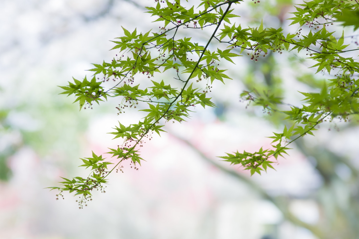 Photograph Spring Colors by Takeshi Marumoto on 500px