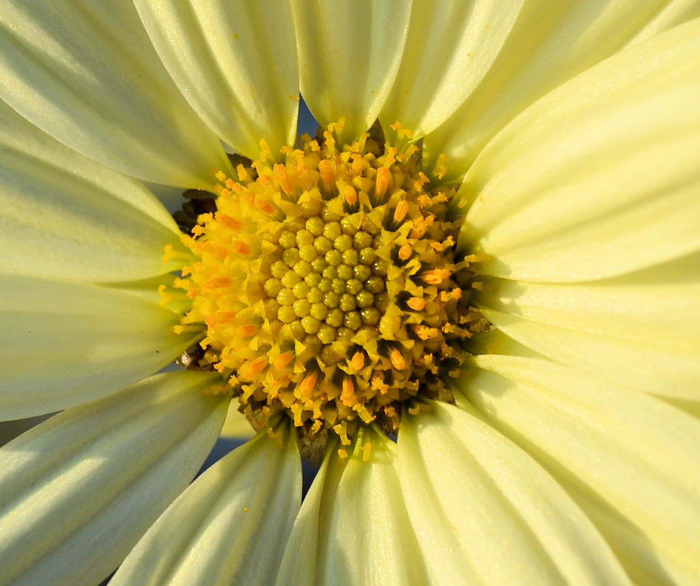 Photograph Marguerite by Heather Aplin on 500px