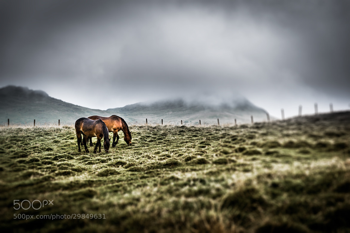 Photograph Together Forever by Miguel Angel Fernández Rodríguez on 500px