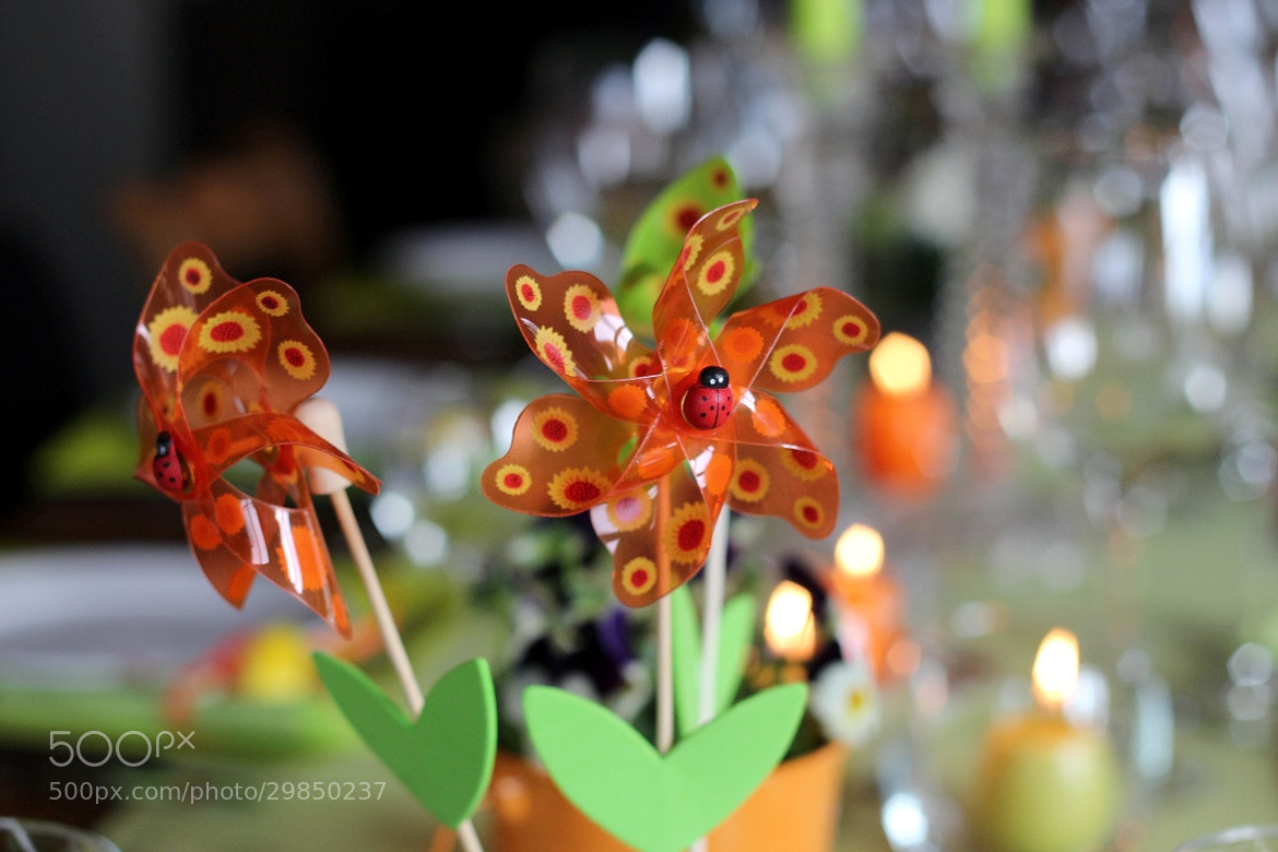 Photograph Easter Decoration by Mehdi Ben Hamida on 500px