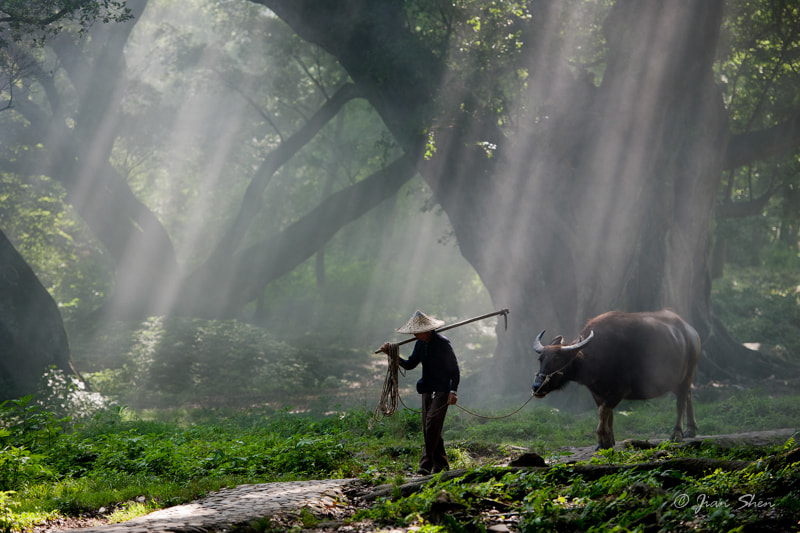 Photograph 耕田归来 Back from the Plow by Jian Shen on 500px
