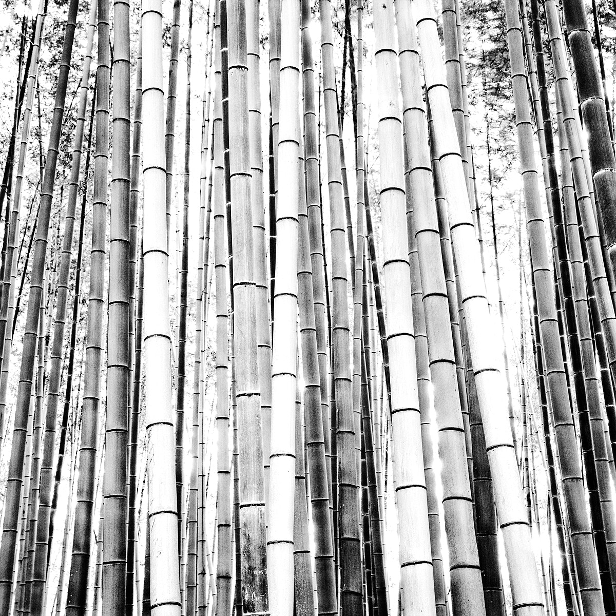 Photograph |||| Bamboo |||| by Geoffrey Gilson on 500px